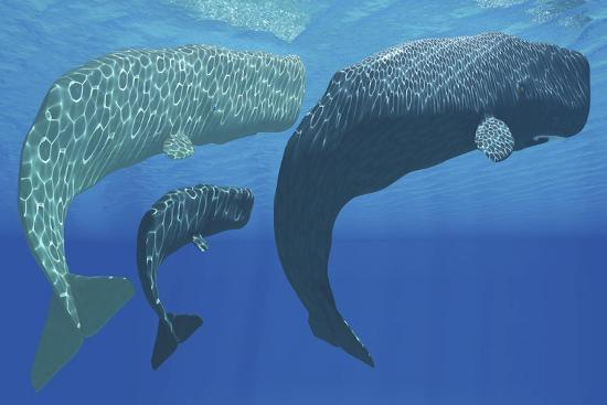 a-mother-sperm-whale-with-calf-is-visited-by-an-interested-male