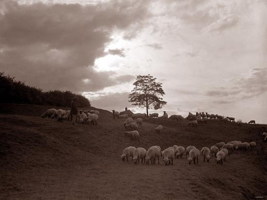 a-shepherd-surveys-his-flock-at-the-end-of-the-day-1935