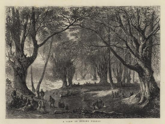 a-view-in-epping-forest