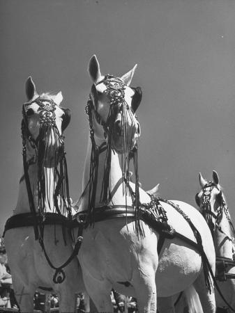 a-view-of-the-army-remount-service-s-parade-of-horses