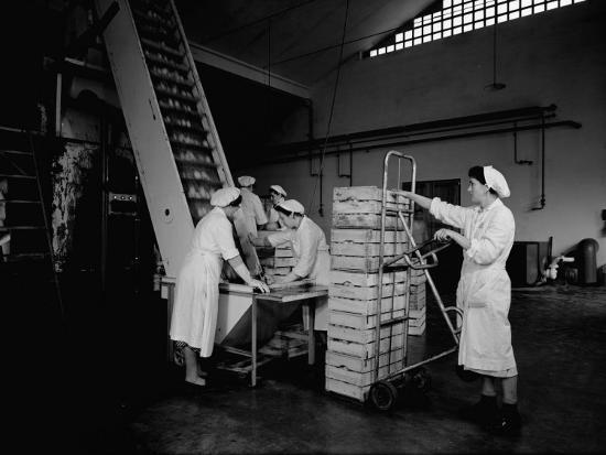 a-villani-loading-fruit-onto-a-conveyer-belt-at-the-colombani-factory-at-portomaggiore-ferrara