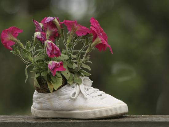 a-white-shoe-used-as-a-flower-pot-with-pink-blossoms