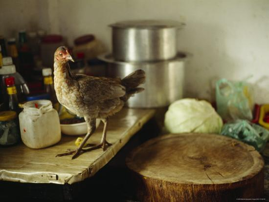 a-wild-chicken-on-a-kitchen-table-next-to-the-chopping-block