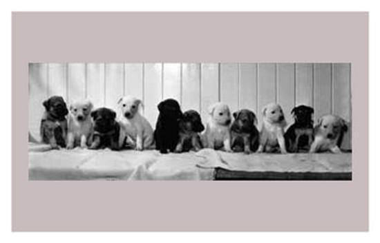 abandoned-pups