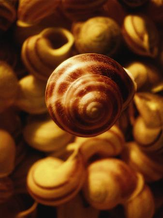 abdul-kadir-audah-cluster-of-seashells