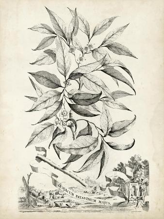 abraham-munting-scenic-botanical-iv