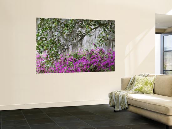 adam-jones-azaleas-and-live-oak-trees-draped-in-spanish-moss-middleton-place-plantation-south-carolina-usa