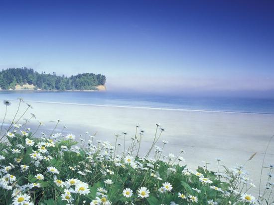 adam-jones-daisies-along-crescent-beach-olympic-national-park-washington-usa