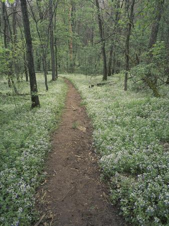 adam-jones-footpath-through-blue-eyed-mary-flowers-raven-run-nature-sanctuary-kentucky-usa