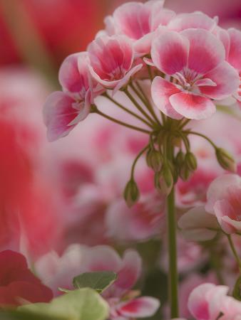 adam-jones-new-guinea-impatiens-flowers-long-island-new-york