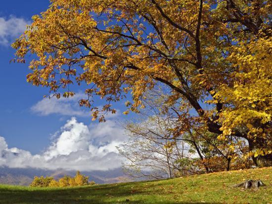 adam-jones-single-tree-and-distant-southern-appalachian-mountains-in-the-fall-north-carolina-usa