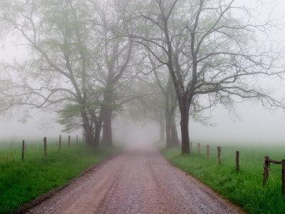 sparks lane on foggy morning cades cove great smoky mountains national park tennessee usa. Black Bedroom Furniture Sets. Home Design Ideas