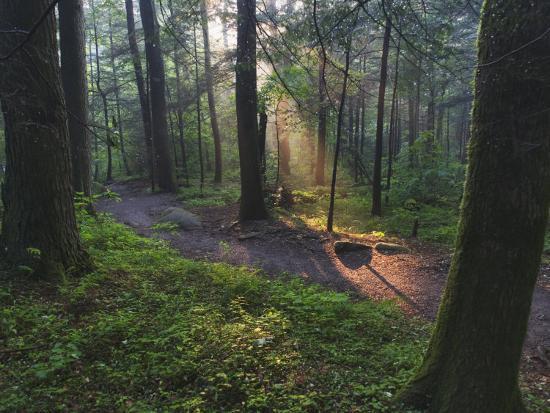 adam-jones-sunlight-streaming-through-hardwood-forest-on-path-to-laurel-falls-great-smoky-mountains-n-p-tn