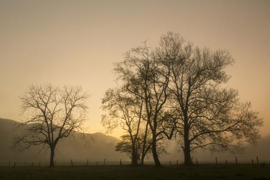adam-jones-trees-silhouetted-at-sunrise-cades-cove-great-smoky-mountains-national-park-tennessee