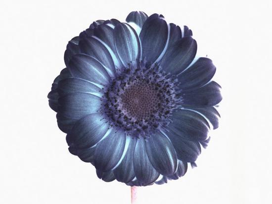 ade-groom-de-saturated-flower