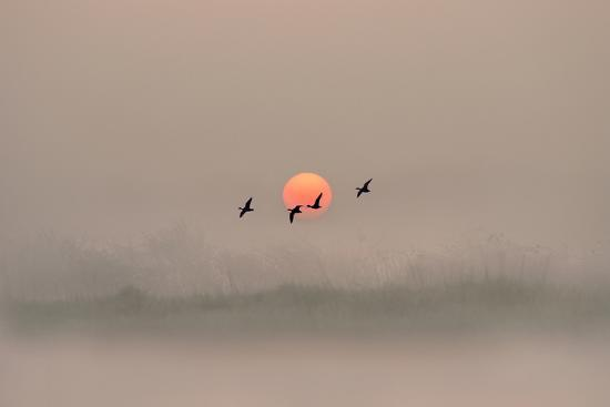 adrian-campfield-dawn-over-the-marshland