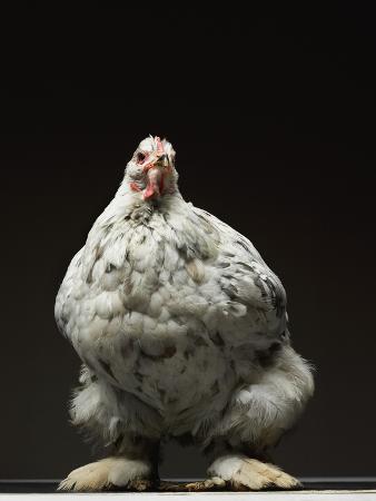 adrianna-williams-chicken