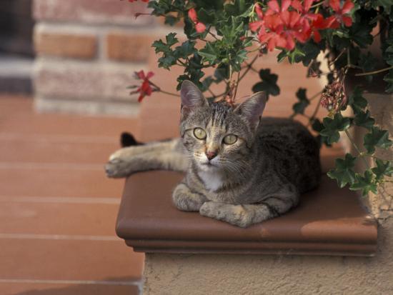 adriano-bacchella-tabby-cat-resting-on-garden-terrace-italy