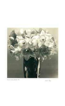 adriene-veninger-daffodils
