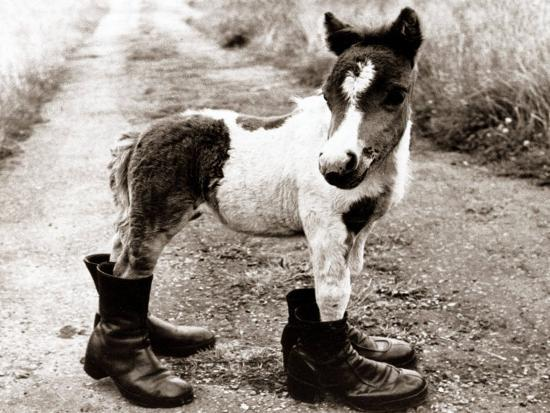 adult-horse-with-giant-boots