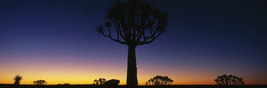 africa-namibia-kokerboom-preserve-quiver-tree
