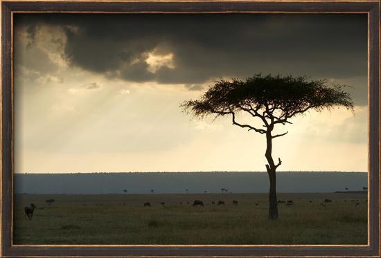 africa-savannah