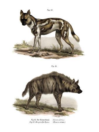 african-wild-dog-1860