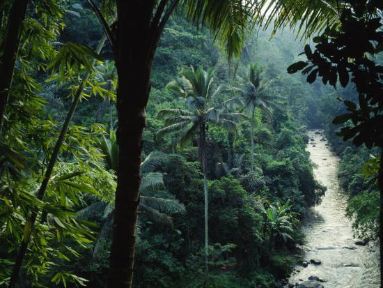 agung-river-cuts-through-desnse-jungle-and-palm-trees