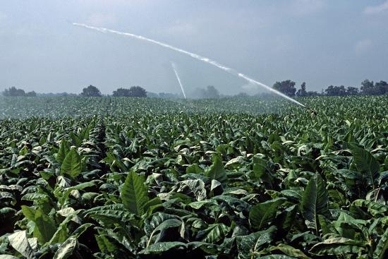 alain-le-garsmeur-watering-of-tobacco-plantation-lexington-kentucky-usa-august-1984