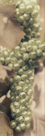 alan-blaustein-chardonnay