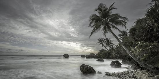 alan-copson-tropical-retreat