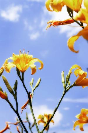 alan-hausenflock-daylilies