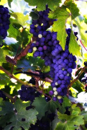 alan-hausenflock-grapes-2