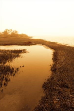 alan-hausenflock-harker-s-island-marsh-ii