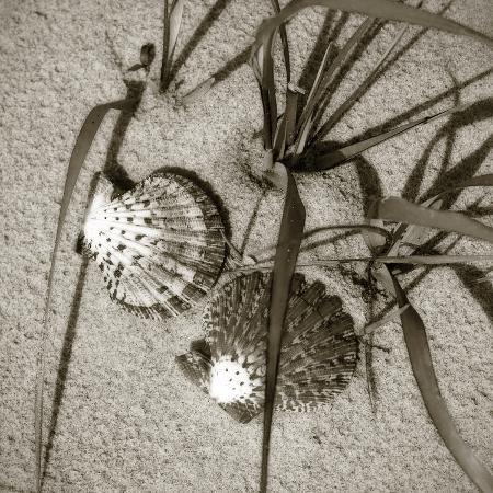 alan-hausenflock-seashells-iv