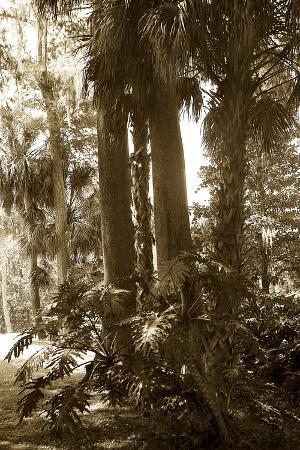 alan-hausenflock-tropical-garden-2