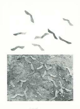 alan-sonfist-seeds