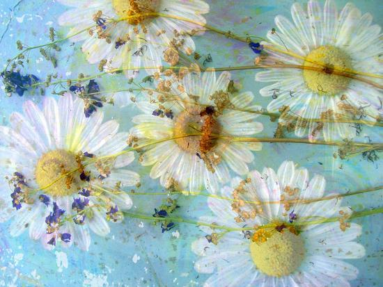 alaya-gadeh-a-dreamy-playful-floral-montage-from-acre-flowers-daisyies-and-other-wild-grown-flowers