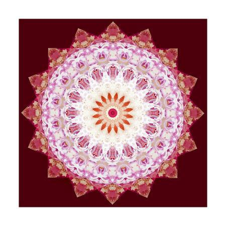 alaya-gadeh-flower-mandala-star-x