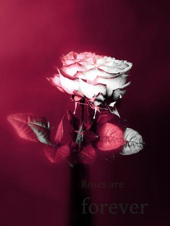 alaya-gadeh-roses-in-a-vase