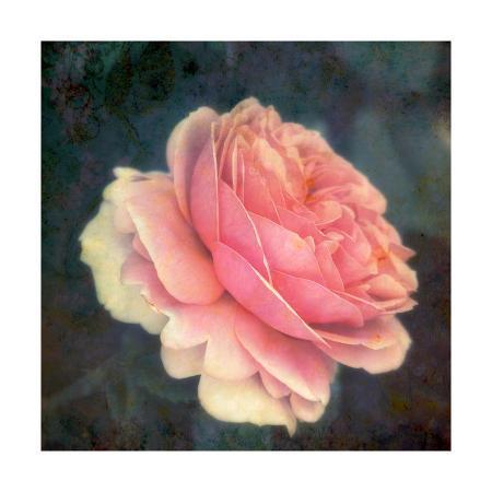 alaya-gadeh-single-pink-soft-rose