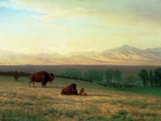 albert-bierstadt-buffalo-on-the-plains-c-1890