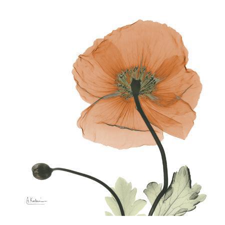 albert-koetsier-a-gift-of-flowers-in-orange