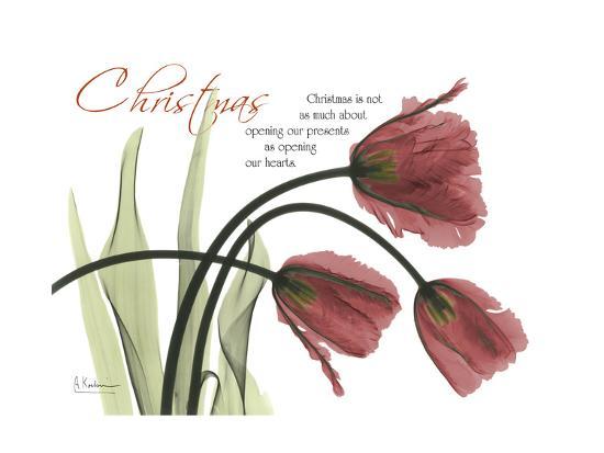 albert-koetsier-christmas-tulips