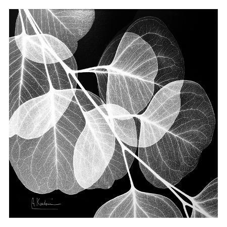 albert-koetsier-eucalyptus-black-and-white