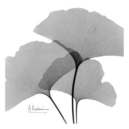 albert-koetsier-ginkgo-leaves-trio-black-and-white