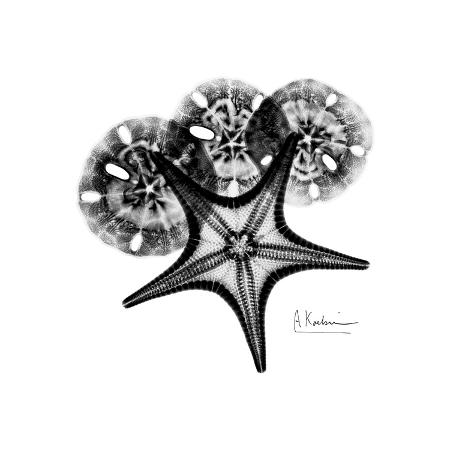 albert-koetsier-gray-starfish-1