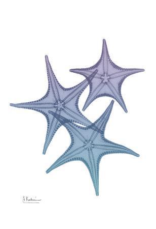 albert-koetsier-lavender-splashed-starfish-2