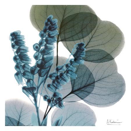 albert-koetsier-lilly-of-eucalyptus
