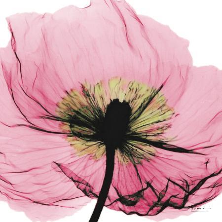 albert-koetsier-poppy-pink